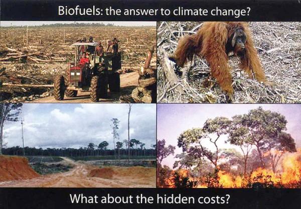Lo que todo ambientalista necesita saber sobre capitalismo y transición a una economía ecológica y socialista