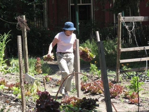 Cultivando en la Ciudad: Florecen Huertas en Santiago de Chile