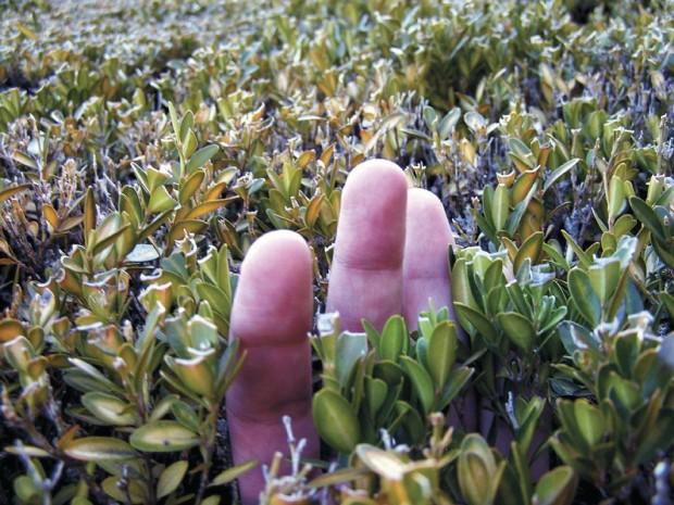 Proyecto Ley de Obtentores: La batalla por los vegetales
