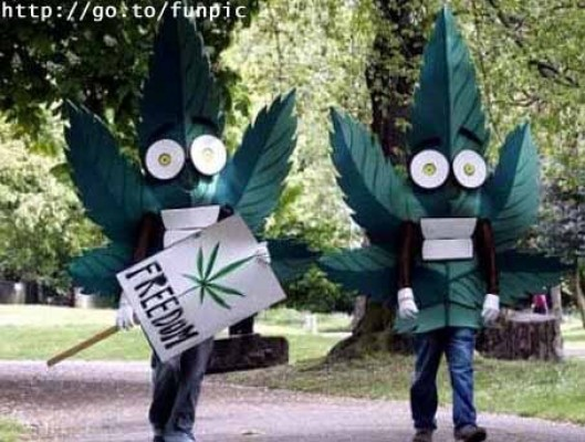La marihuana sigue siendo la droga que más se consume en el mundo