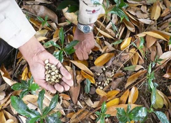 Temuco: Realizarán encuentro por las semillas libres