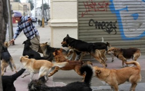 Variaciones legales facilitan exterminación de perros y gatos callejeros