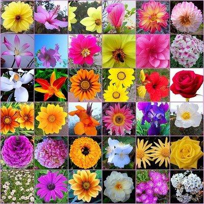 Flores de Bach: Organizan 3er Congreso Chileno de Terapia Floral