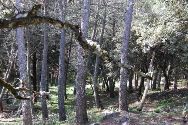 ONU: arranca el Año Internacional de los Bosques