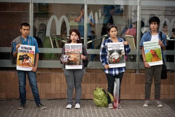 Jueves 24: EligeVeganismo invita a Taller sobre Derechos de Animales