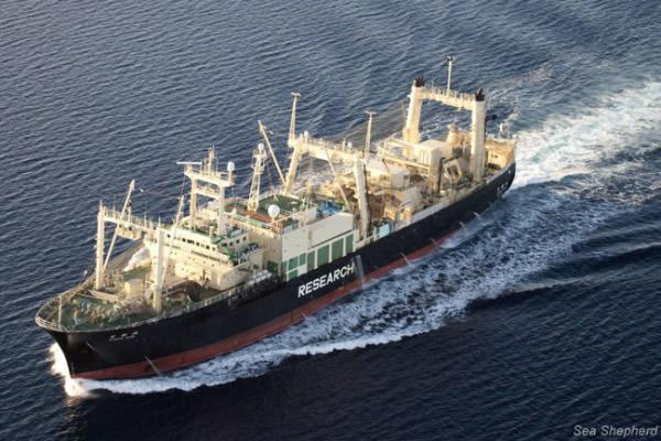 Buque ballenero japonés a horas de ingresar a aguas chilenas