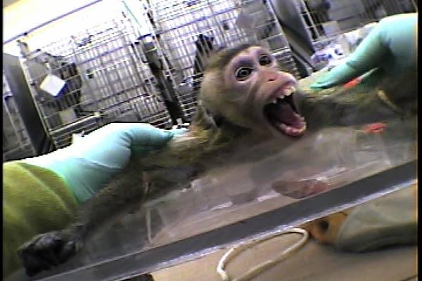 Animalistas convocan a semana de acción contra laboratorio AstraZeneca