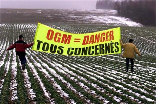 En Europa retroceden los organismos genéticamente modificados