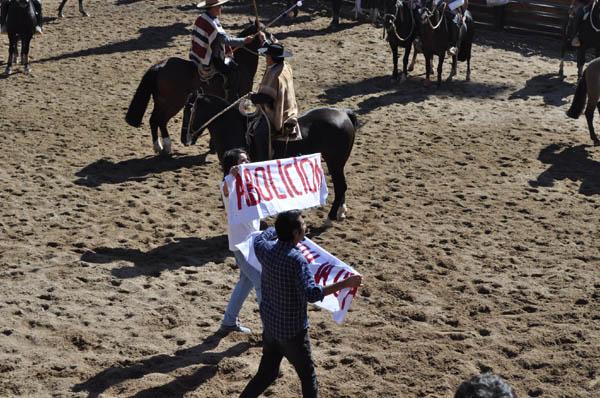 Denuncian maltrato animal en medialuna del Champion de Chile