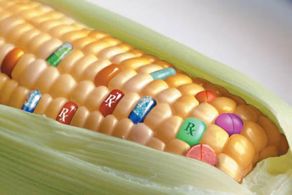 Estudios científicos cuestionan nuevamente la seguridad de los alimentos transgénicos