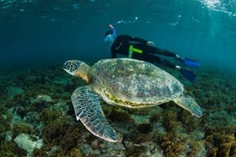 Llaman a proteger Isla de Pascua y Salas y Gómez y crear áreas marinas protegidas