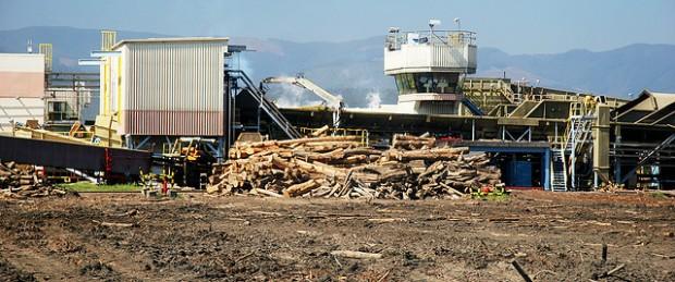 El gran negocio que destruye la Región del Bío Bío