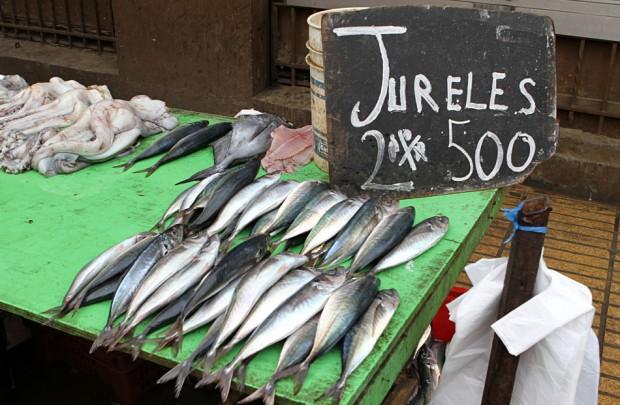 Investigan casos de intoxicación por consumo de jurel en Chiloé y Calbuco