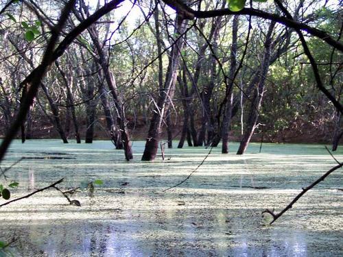 Paraguay proclama recursos naturales como bienes estratégicos del país