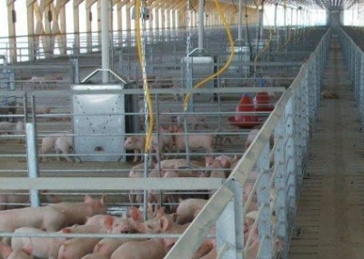 Promueven el veganismo ante crisis de Agrosuper