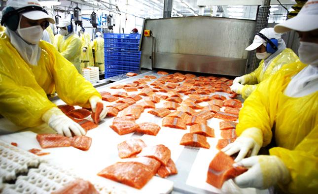 Multinacional noruega rechaza todas las demandas de los trabajadores salmoneros