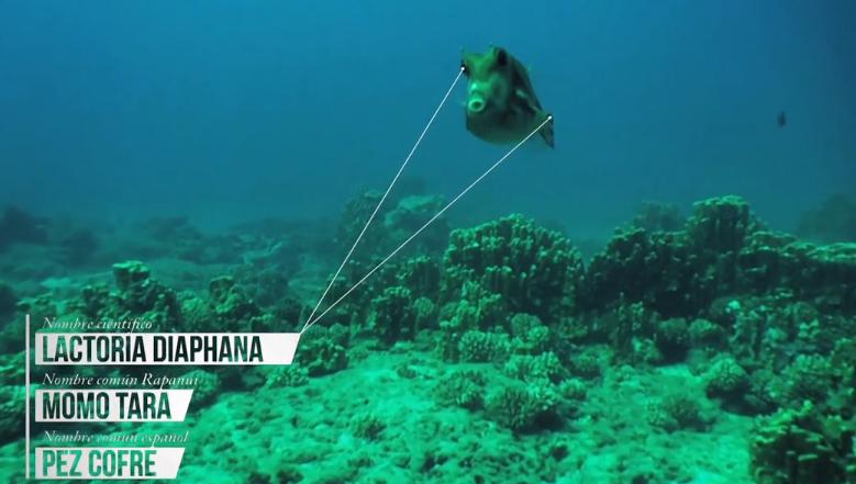 La impresionante fauna submarina de Isla de Pascua