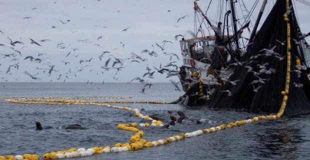 Emplazan a Sernapesca a dar nombres de seis industrias pesqueras investigadas