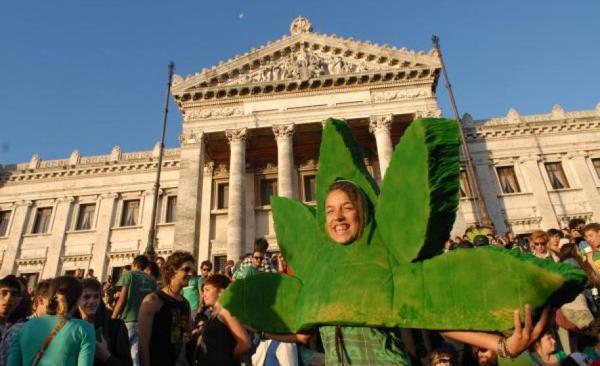 Sepa como funcionará la regulación del cannabis en Uruguay