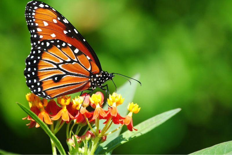 Qué estamos haciendo?. Mientras en 40 años duplicamos la cantidad de humanos, el número de insectos disminuyó un 45%