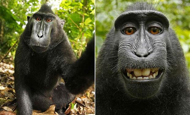 La polémica por el Mono que se hizo una Selfie