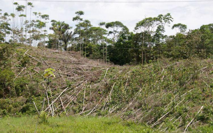 El narcotráfico acaba  con los bosques y las selvas de América Central