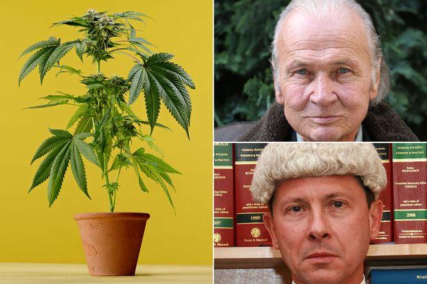 Juez decide no enviar a prisión a paciente con cáncer que cultiva cannabis