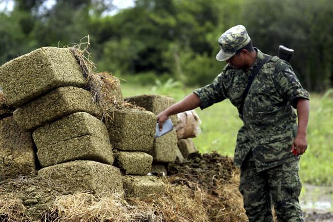 Expresidentes de América Latina alertan que la política represiva de drogas fomenta el delito