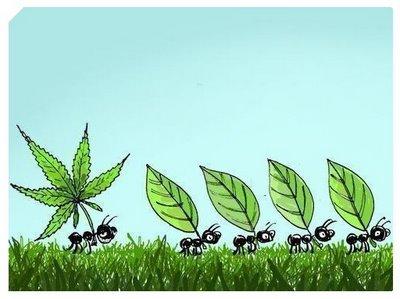La Cannabis: mejoras cognitivas y cultura (II)