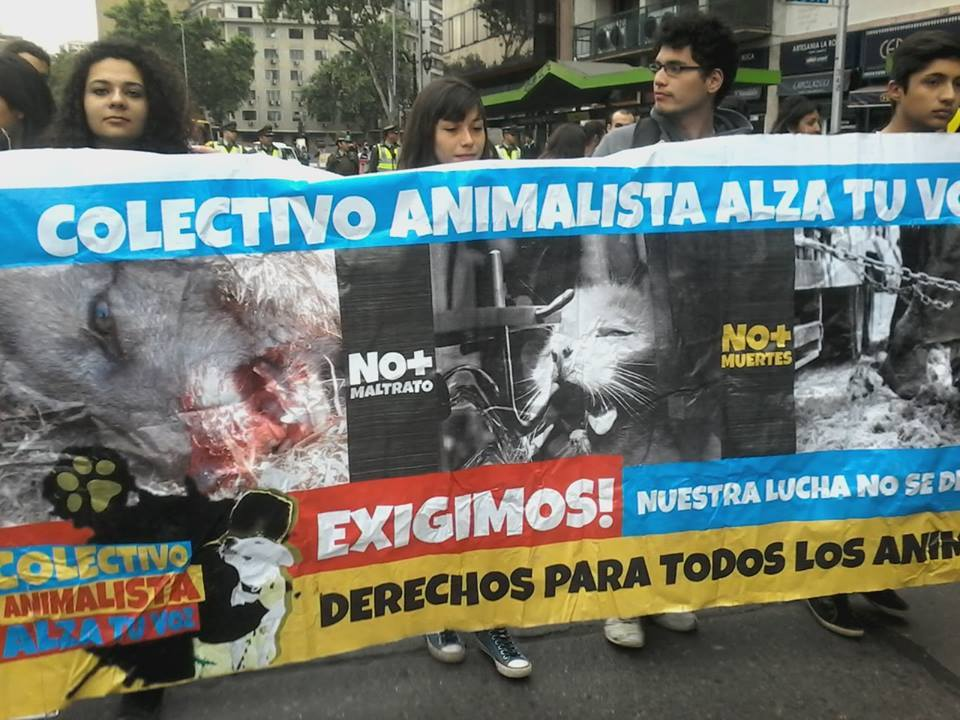 Carta del Colectivo Animalista Alza tu Voz contra la persecución política a los movimientos veganos.