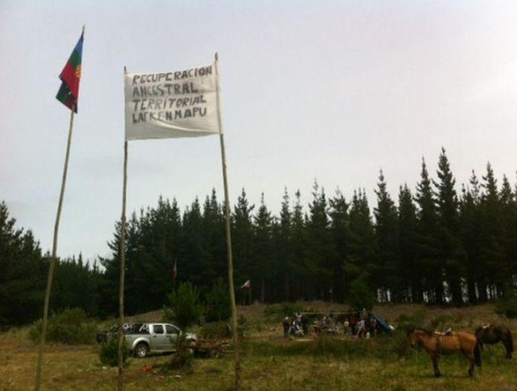Comunidades mapuche de Pangue se tomaron fundo forestal en Los Álamos
