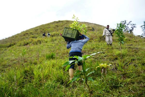 Gobierno Bolivariano reforestó 2.5 hectáreas del Parque Nacional El Guácharo