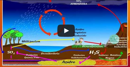 Los ciclos biogeoquímicos en vídeo