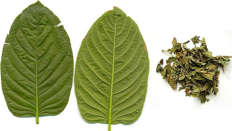 Kratom, una droga poco estudiada que se extiende por la Red y amenaza al mundo
