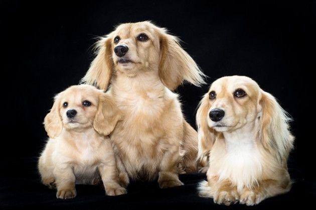 La clonación de mascotas, el nuevo negocio surcoreano