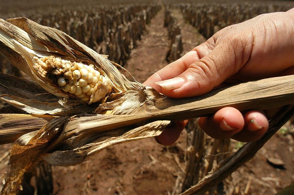 ONU advierte que más de dos millones de centroamericanos se encuentran en riesgo alimentario