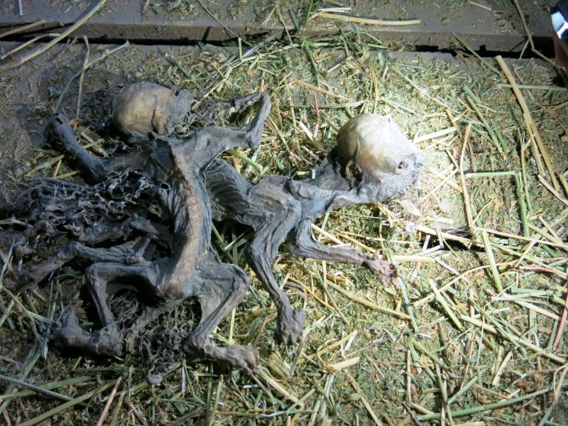 Encuentran dos extraños cuerpos dentro de una bodega