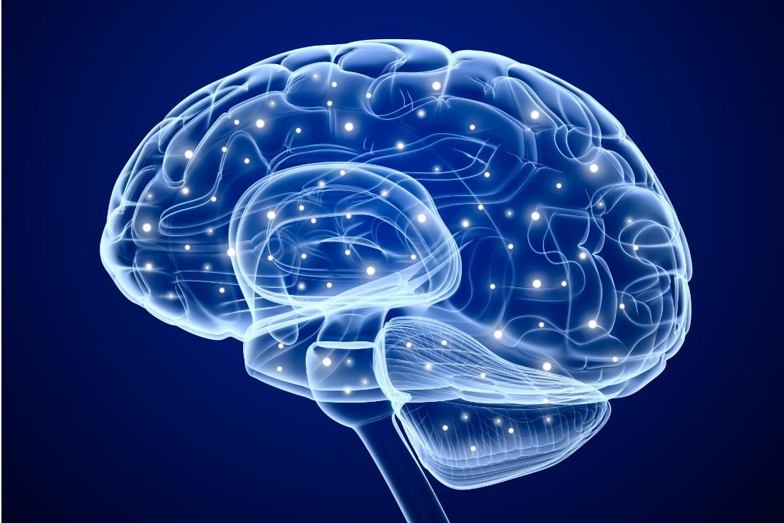 Estudio cerebral rastrea dos tipos de personas extrovertidas