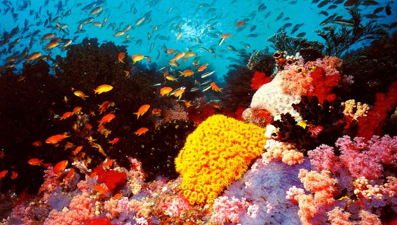 Los corales de la Gran Barrera de Arrecifes comen plástico