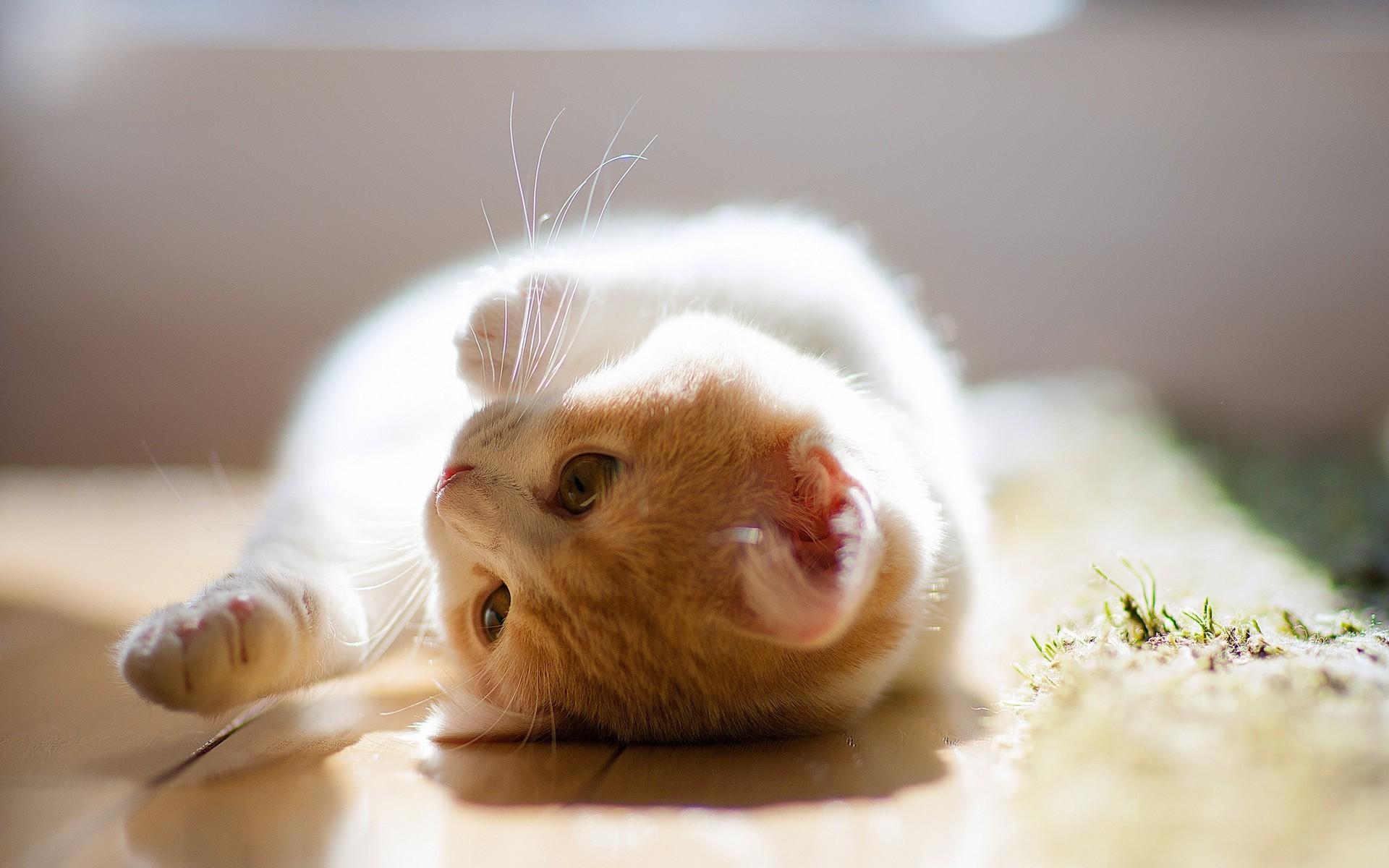 Pruebas de que los gatos funcionan con energía solar [VIDEO]