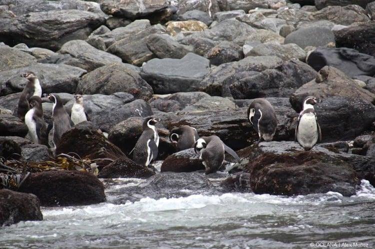 Congreso: Avanza votación de proyecto que crea el Servicio de Biodiversidad y Áreas Protegidas