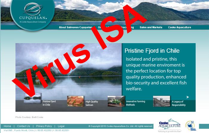 Industria salmonera: Virus ISA afecta a otro centro de cultivo en Aysén