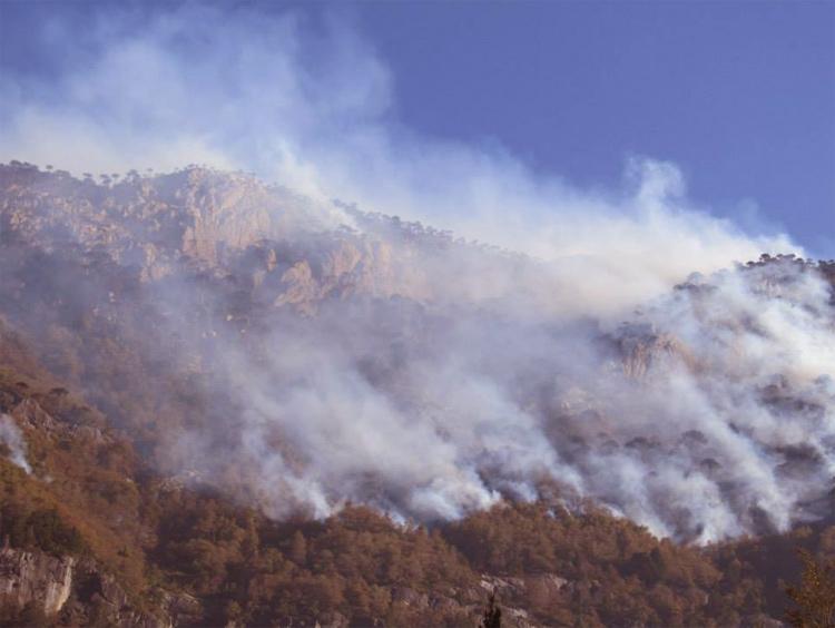 ¿Quiénes se beneficiarían con los incendios de los bosques de araucarias? Mineras, forestales e hidroeléctricas