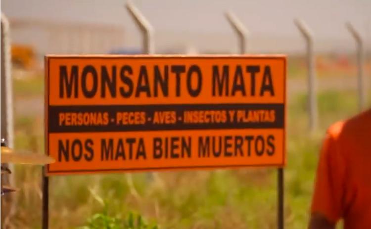 Un millón de firmas contra el glifosato, el herbicida más popular que la Coca Cola