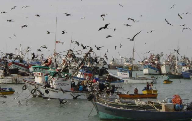 El colapso de la merluza y la Ley Longueira: El balance de la pesca artesanal es deficitario