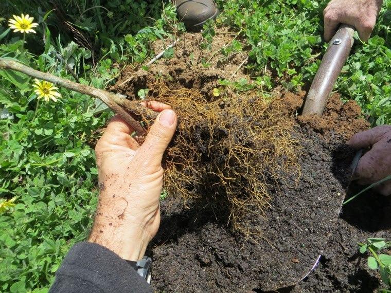 Promueven la agricultura regenerativa para revertir el cambio climático