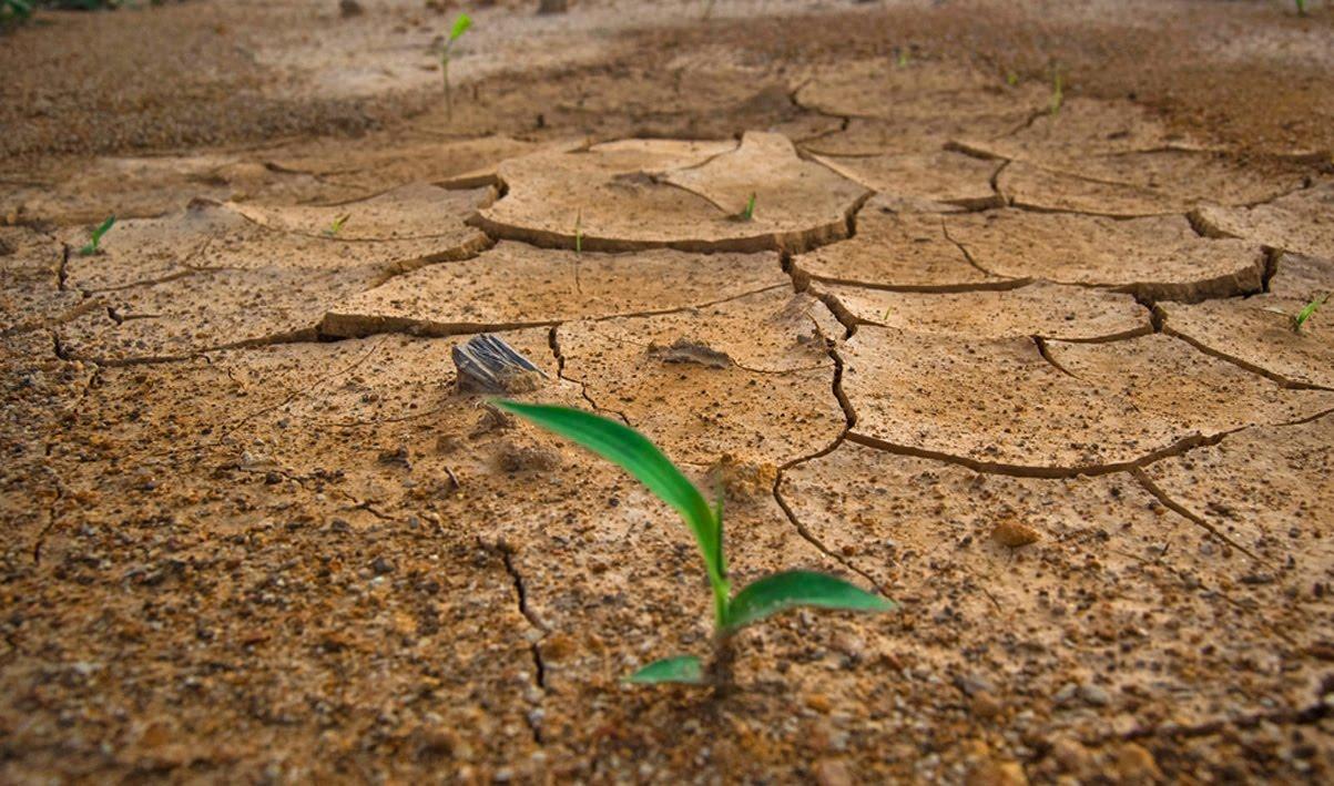 2015: El año más cálido de la Tierra