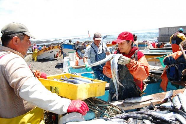 La pesca industrial arrasa con la artesanal en América del Sur