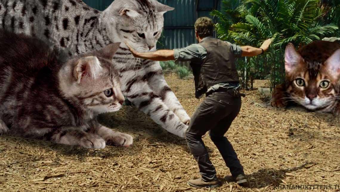 "Una parodia a Jurassic World reemplaza dinosaurios por ""feroces"" gatitos"