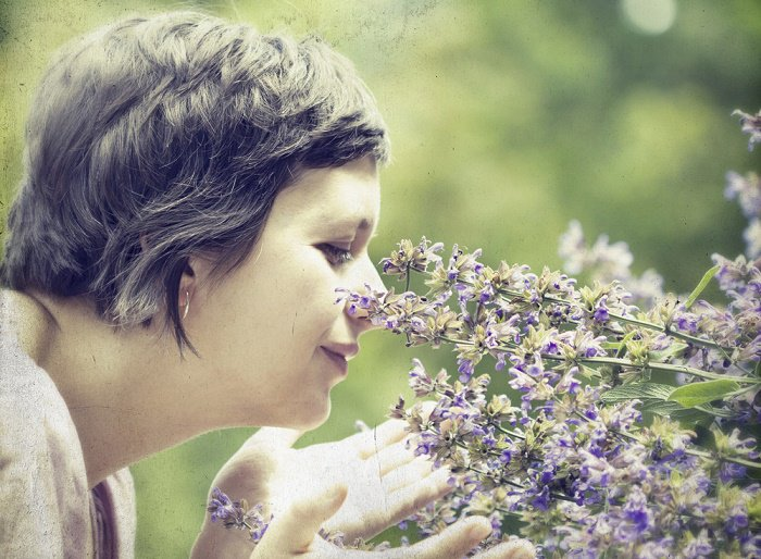 El olor del romero podría aumentar tu memoria
